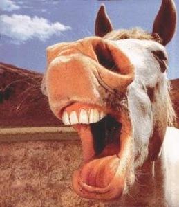 horses-laugh